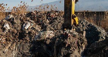 تلفات پرندگان میانکاله به ۵۳۳۰ رسید
