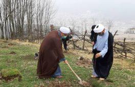کاشت 1300 اصله نهال در بقاع متبرکه سوادکوه